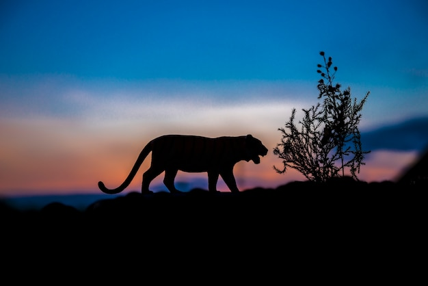 Silhouette of tiger animal at sunset background.