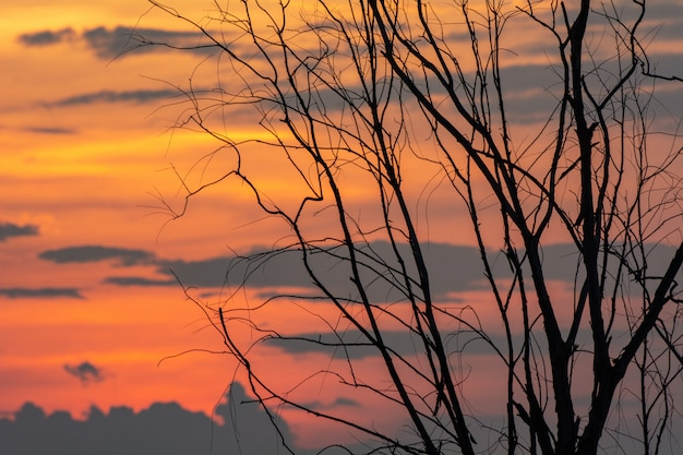 Silhouette of tree branch with sunset, halloween background.