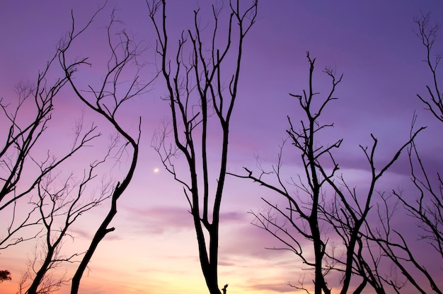 Silhouette of tree branches with twilight sky