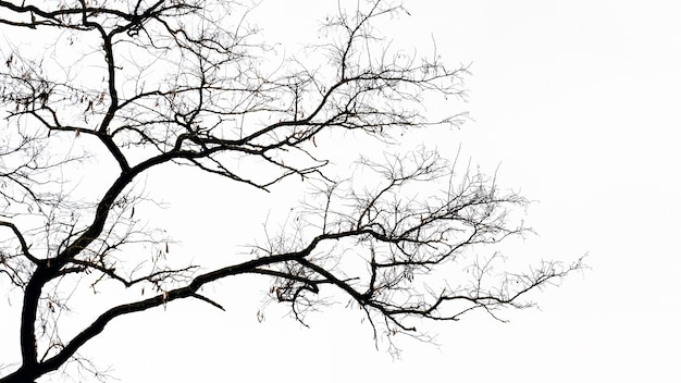 Silhouette of a tree with bare branches isolated