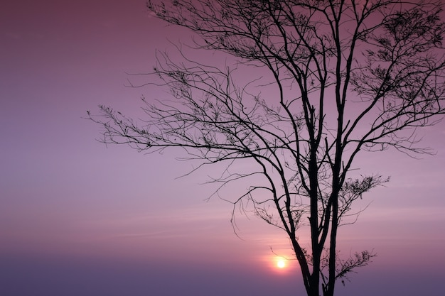 Silhouette of a tree with branch and sunrise background.