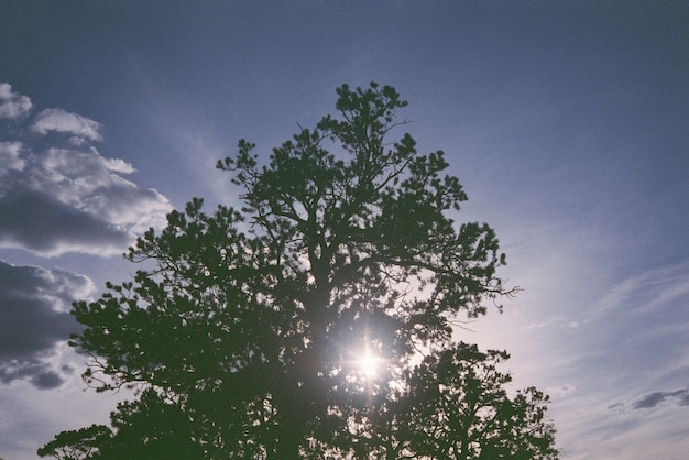 Silhouette of a tree with the bright sun and beautiful white clouds in the background