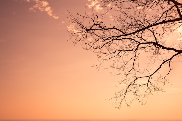 Silhouette of a tree without leaves,orange sky