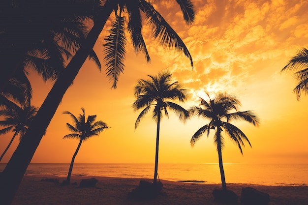 Silhouette of tropical beach during sunset twilight. seascape beach and palm tree at sunset