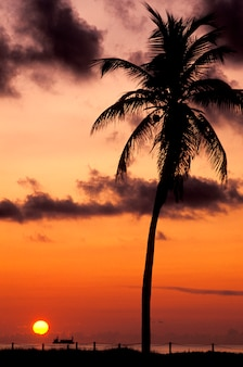 Silhouette of tropical palm tree with orange sunset in background