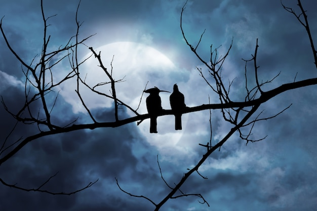 Silhouette of two birds on a branch in a night scene with a moonlit background in a cloud