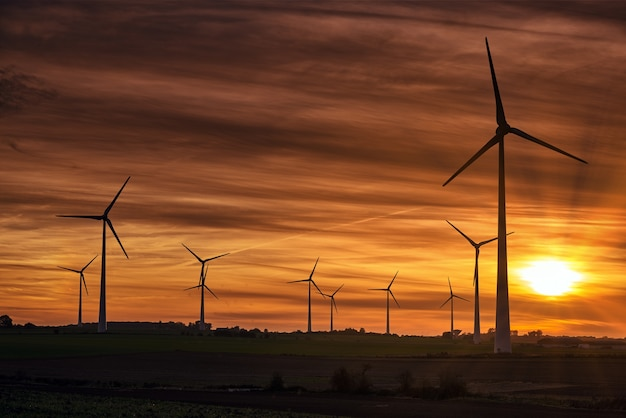 Silhouette of windmills on a field during sunset