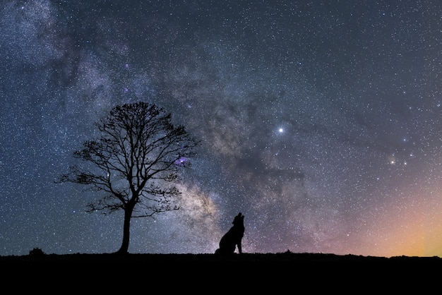 Silhouette of a wolf next to a tree with the milky way