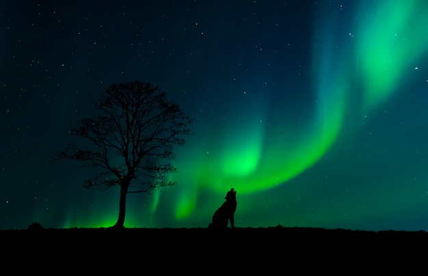 Silhouette of a wolf next to a tree with the northern lights in the background
