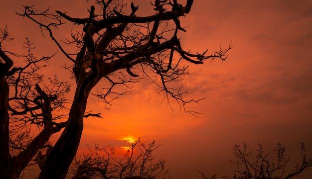 Silhouette мертвое дерево и ветви с красным романтичным небом захода солнца в лете. мирный и спокойный фон. счастливое время вечером с красотой на природе. закатные сцены в романтических романтических романах.
