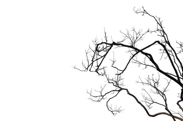 Silhouette мертвое дерево или сухое дерево на белой предпосылке с путем клиппирования.