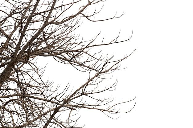 Мертвые ветви, silhouette мертвое дерево или сухое дерево на белой предпосылке с путем клиппирования.