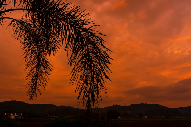 Silhouetted by a palm tree on the background of an unusual fiery red tropical sunset.