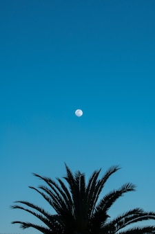 Silhouetted palm tree and full moon on blue sky