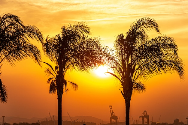 Silhouettes of coconut palms in the port area of rio de janeiro.