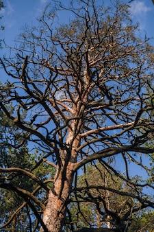 白い背景に葉のない黒い木のシルエット、木の枝のネガティブ写真