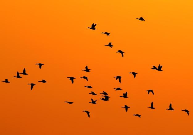 夕焼け空を飛んでいるアヒルのシルエット