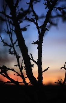 봄 일몰 배경에 나무 가지의 실루엣.