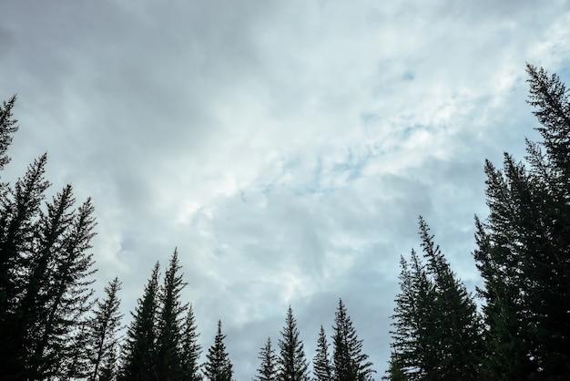 曇り空のモミのトップスのシルエット