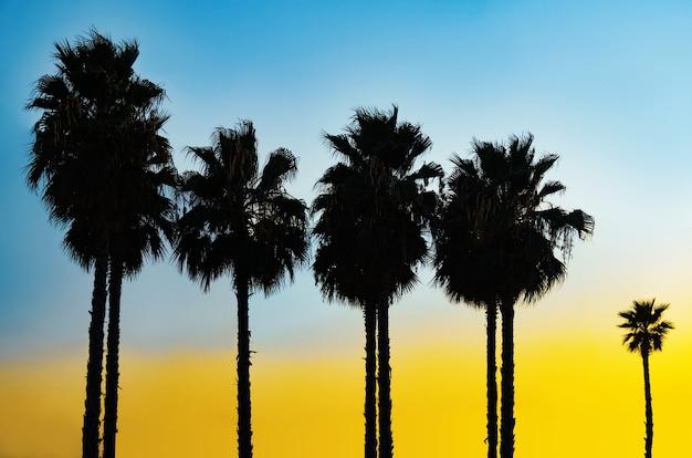 青と黄色の夕焼け空の背景にヤシの木のシルエット
