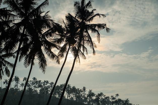 日の出のヤシの木のシルエット