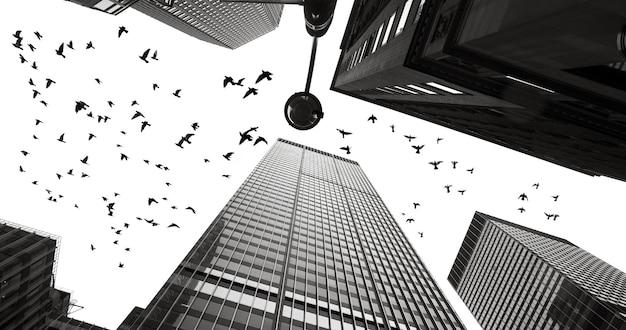 マンハッタンの高層ビルの間のハトのシルエット。白黒画像