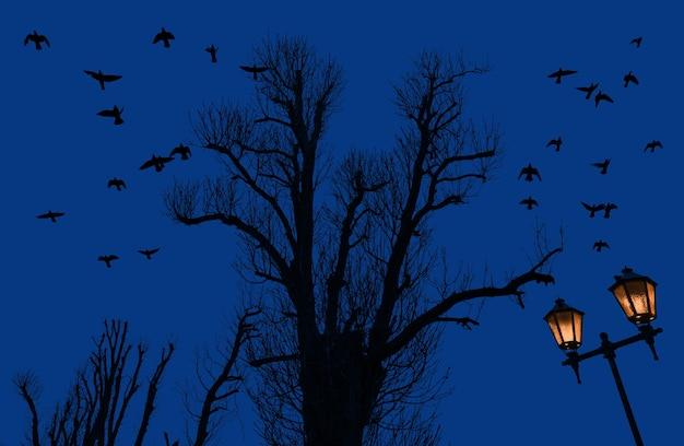 月と街灯と夕方の空を背景に木と飛んでいる鳥のシルエット