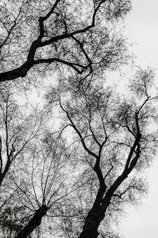 木のシルエット、黒と白
