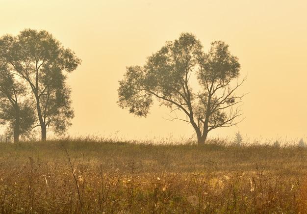 Силуэты деревьев в золотом свете