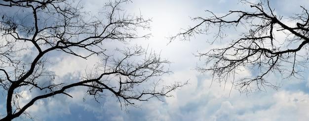 曇り空の背景に木のシルエット、パノラマ