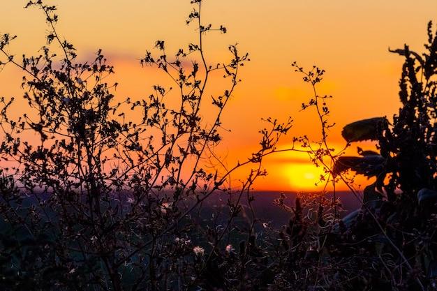 日没時の空の背景に木のシルエット
