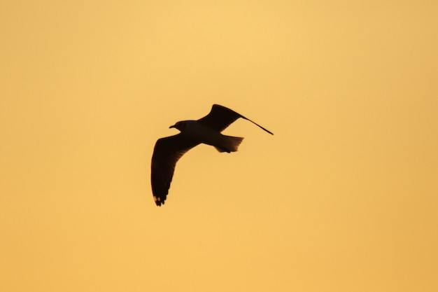 Silhouettes of seagulls flying above the sunset. , with a beautiful orange