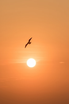 Silhouettes of seagulls flying in the sunset.