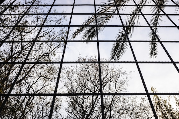 Silhouettes of trees growing out of a jail you see through bars by people deprived of liberty.