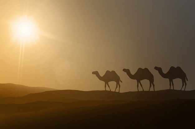 Silhouettes of walking camels