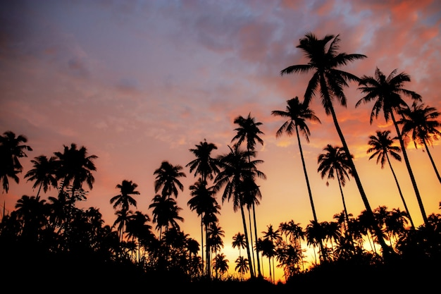 Пальма с silhouettethe на красочном небе.