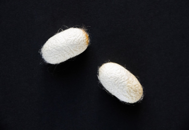 Silkworm cocoon isolated on a black background