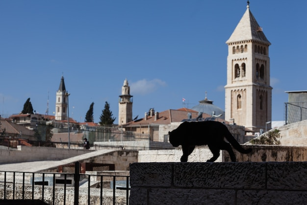 Siluette of a black cat on the roofs of the old town of jerusalem