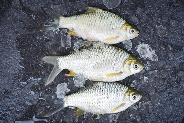 얼음에 실버 미늘 물고기, 시장 음식에 자바 미늘 잉어 물고기 신선한 생선 평면도