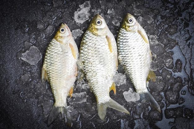 얼음에 은색 미늘 물고기, 시장 음식에 자바 미늘 잉어 생선 신선한 생선 평면도