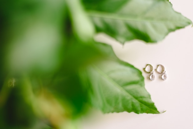 Silver earrings on isolated white background, with leaves of decoration plants.