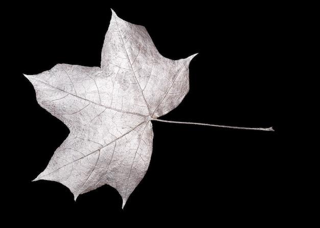 黒の背景に分離された銀の葉