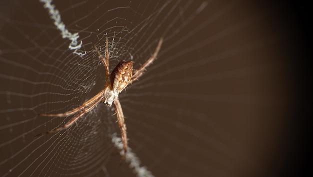 Серебряный паук в паутине, видимый через макрообъектив, выборочный фокус.