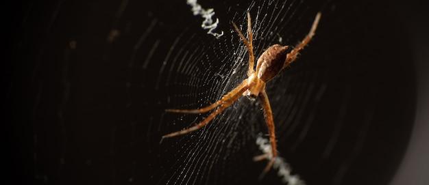 Silver spider in its web seen through a macro lens, selective focus.