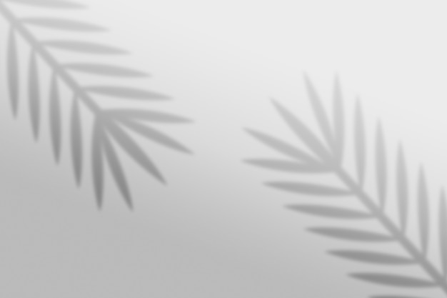 간단한 크리스마스 나뭇잎 그림자 배경