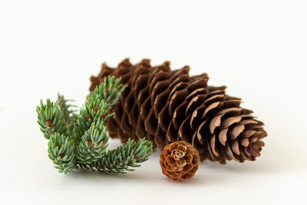Simple composition of big and small pine cones with pine twig isolated on white background.