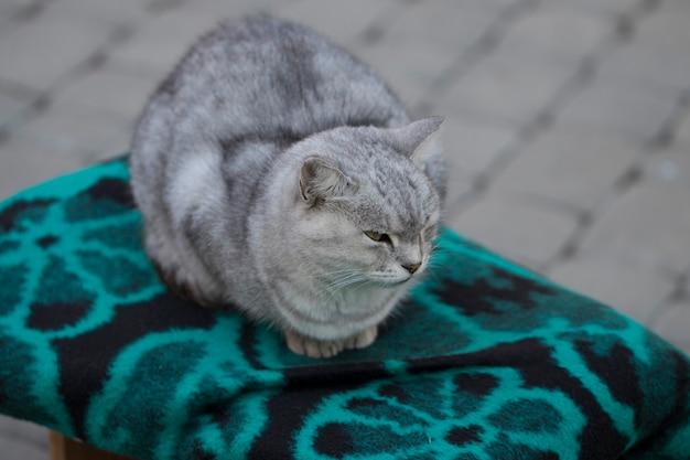 椅子に座っているシンプルな灰色の猫