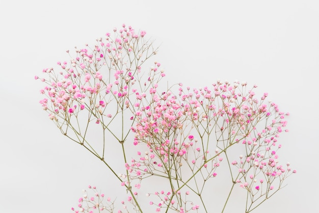 Simple pink flower twigs