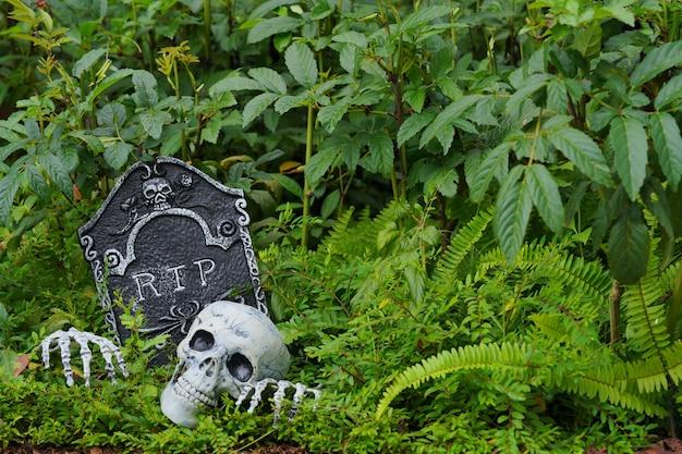 나뭇잎의 시뮬레이션 된 시체와 두개골