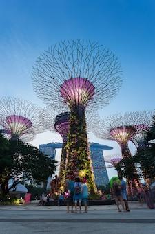 Сингапур - 28 августа 2016: супердеревья в садах у залива.